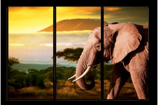 Модульная картина Слон в саванне
