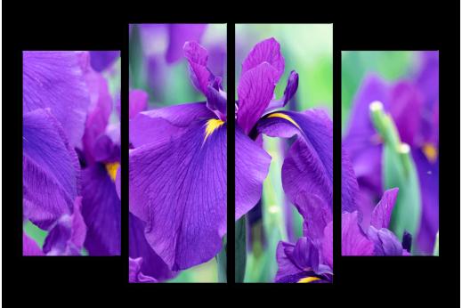 Модульная картина  Фиолетовые ирисы