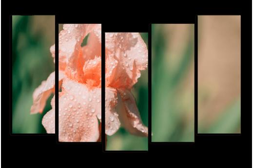 Модульная картина Нежно розовый ирис