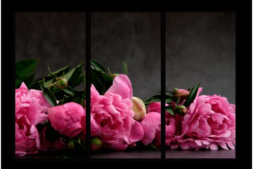 Модульная Розовые пионы