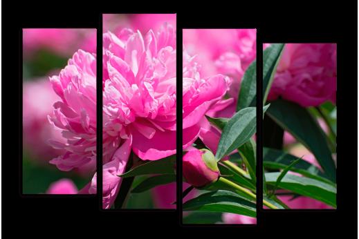 Модульная Ярко-розовый пион