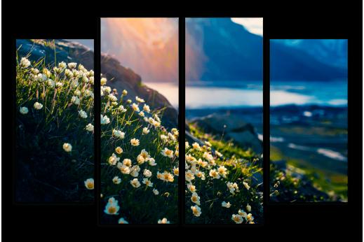 Модульная картина Полевые белый цветы