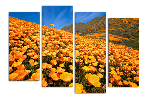 Модульная картина Жёлтые полевые цветы