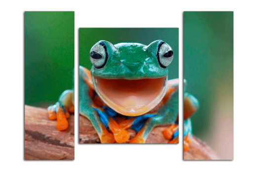 Модульная картина Лягушка