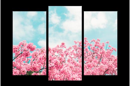 Модульная картина Сакура на фоне неба