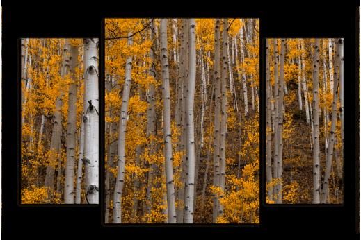 Модульная картина Осенние березы